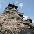 天守閣 with 桜!